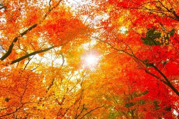 """""""I'm so glad I live in a world where there are Octobers."""""""
